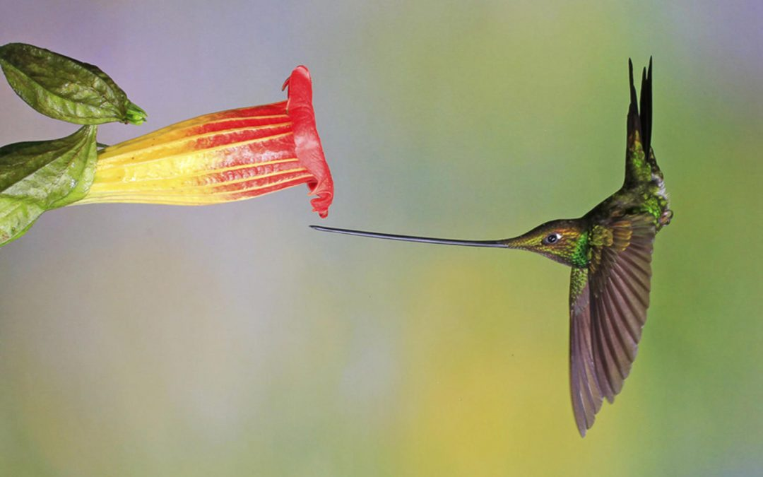 The value that only Hummingbirds bring!