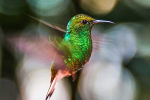 Hummingbirds are faster than the eye
