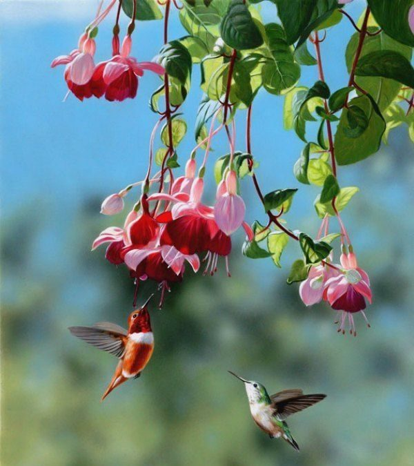 Colourful hummingbirds seek nectar